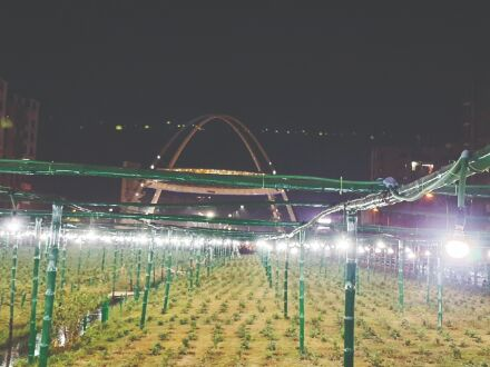 Now, artificial lights for better bloom in New Town