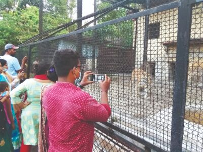 Special measures to keep Zoo inmates warm, this winter