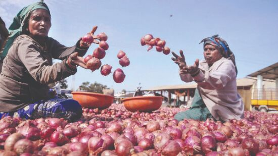 Nationwide average retail price of onions down 60% since 2019