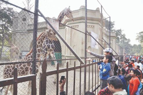 Now, watch live videos of Alipore Zoo inmates on FB