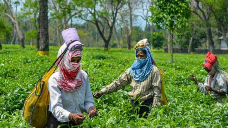Tea workers remain loyal to BJP, minorities to Cong-AIUDF in Assam