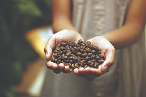 Indias coffee exports witnessing decline, hit 9-yr low in FY20